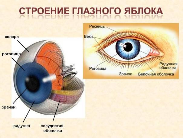 Глаз человека. Заболевание, диагностика, процедуры