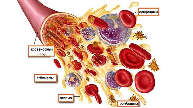 Кровь человека. Что вы знаете о заболеваниях крови?