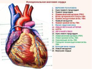 Сердце человека. Что вы знаете о заболевании сердца?