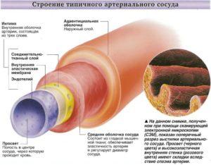 Артерии. Что вы знаете о болезнях связанных с ними