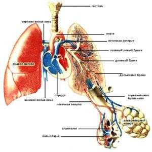 legkie-opisanie-zabolevaniya-diagnostika-i-lechenie1