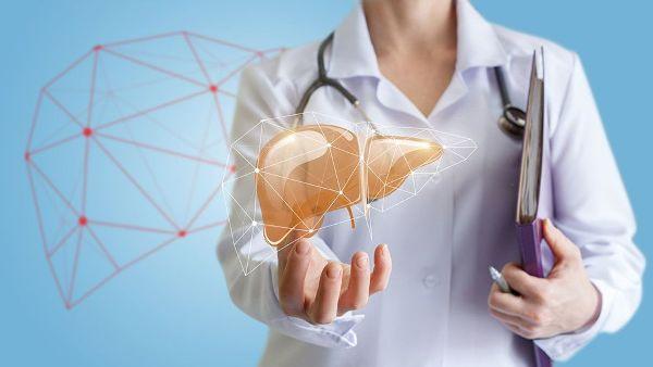 Печень человека. Строение, диагностика и лечение