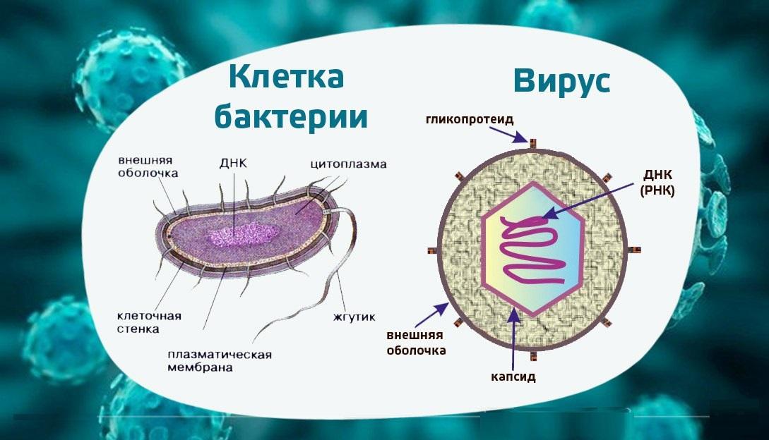 Бактериальные и вирусные инфекции