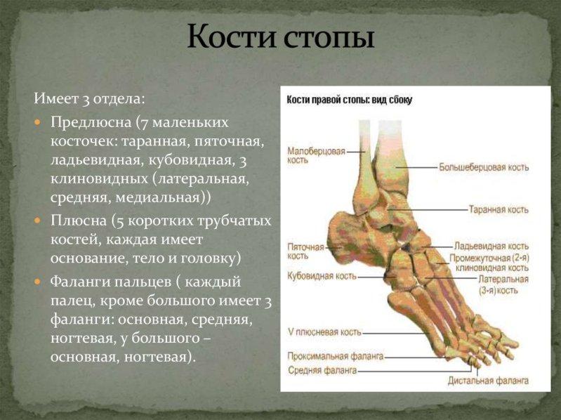 Ступни ног. Строение, функции, заболевания и уход
