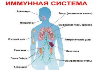 иммунная